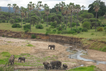 Safari Tanzania 4 Days 3 Nights